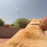 Куда побежит эта СОБАКА С КАМЕРОЙ на спине? Видео. Анекдоты про собак.