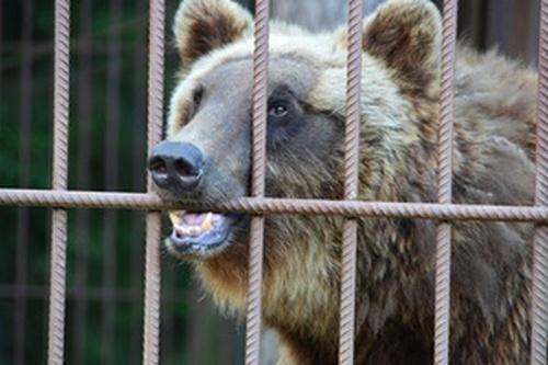 devushke-medved-otorval-ruku-a-muzh-brosil-ee-smotret-video