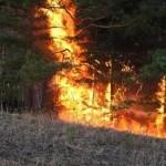 Горит таежный лес: пожары в Бурятии и Забайкалье ВИДЕО
