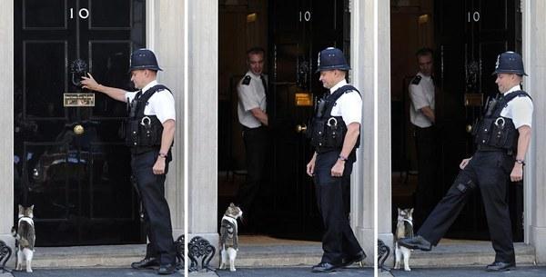 policejskij-pnul-kota-britanskogo-premera-video