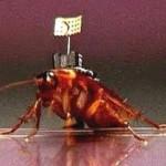 Таракана-шпиона разработали ученые Балтийского университета ВИДЕО