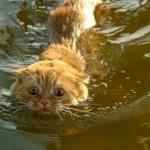 В США штат Алабама рыбаки выловили двух одинаковых котят ВИДЕО