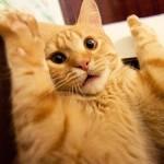Террористы ИГИЛ вербуют котов Или почему коты боятся огурцов  ВИДЕО