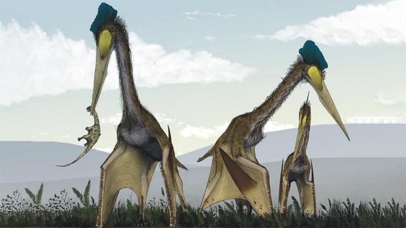 okamenelosti-ogromnyx-pterozavrov-rasskazali-o-zavtrake-monstra
