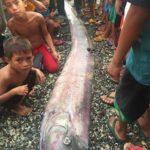 Чудовища появились на Филиппинах после землетрясения ФОТО