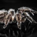 Стали известны 3 новых вида гигантских пауков  ФОТО