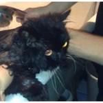 Кота моют, а он кричит: «Я — БЫК! Я — мужик! Я сам умею мыться!!»  ВИДЕО