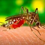 В Германии женщине от укуса комара ампутировали ноги и руку