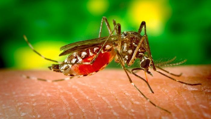 v-germanii-zhenshhine-ot-ukusa-komara-amputirovali-nogi-i-ruku