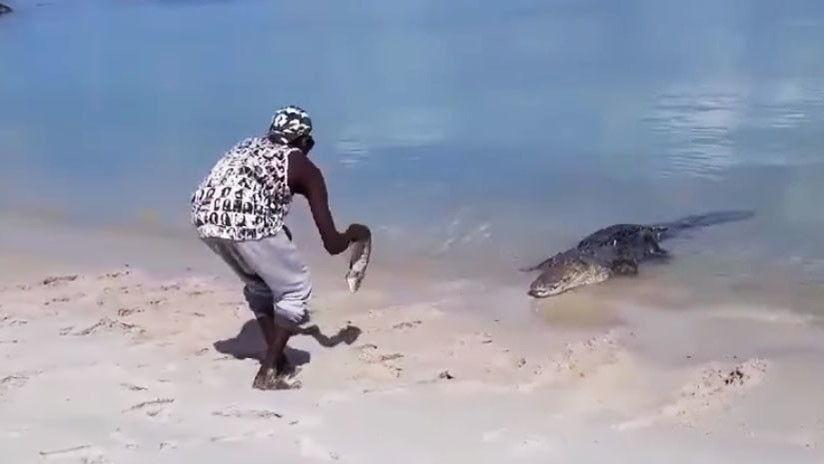 avstralijskij-indeec-igraet-s-krokodilom-video