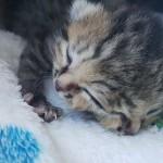 Уникальный котенок родился в Южной Африке ВИДЕО