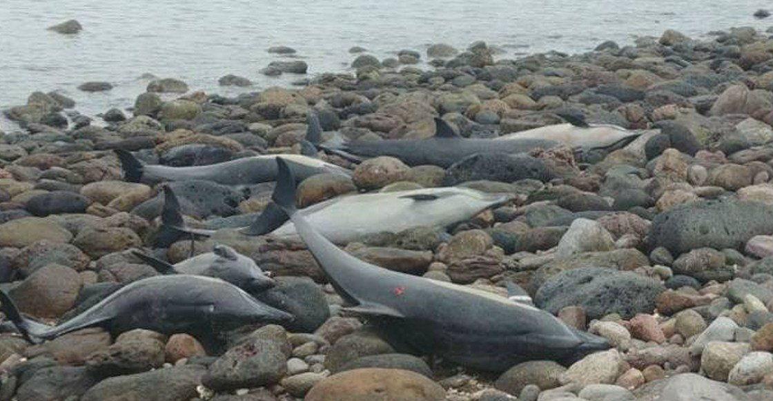54-delfina-vybrosilis-na-plyazh-v-meksike-foto-i-video