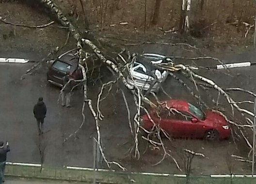 uragan-v-moskve-unes-odnu-zhertvu-i-pokalechil-desyatki-chelovek-video