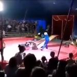 Под Волгоградом в цирке шапито медведь напал на дрессировщика