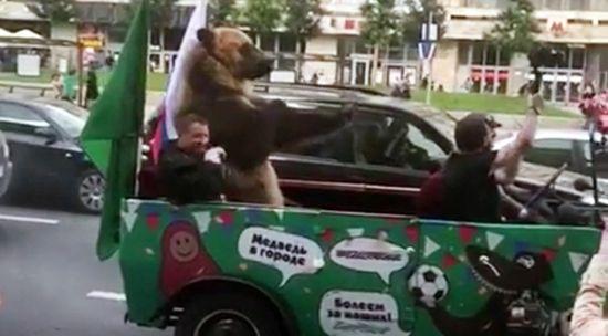 v-moskve-exal-medved-s-dudkoj-v-avto-i-privetstvoval-bolelshhikov