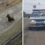 В Печоре медведь пришел на детскую площадку ВИДЕО